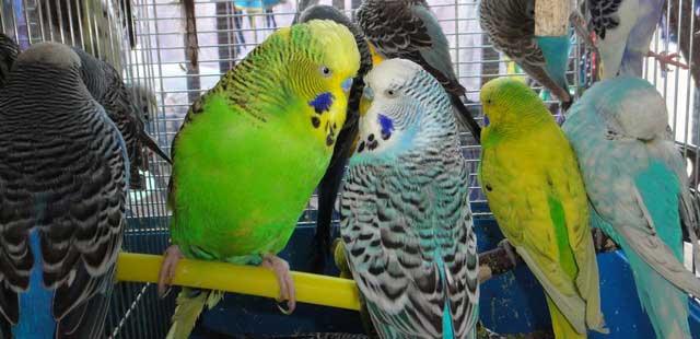 выставочные попугаи зоофан